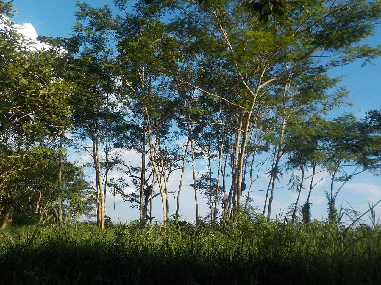 Forêt_amazonienne